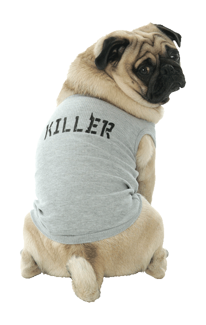 T-Shirts for Dogs